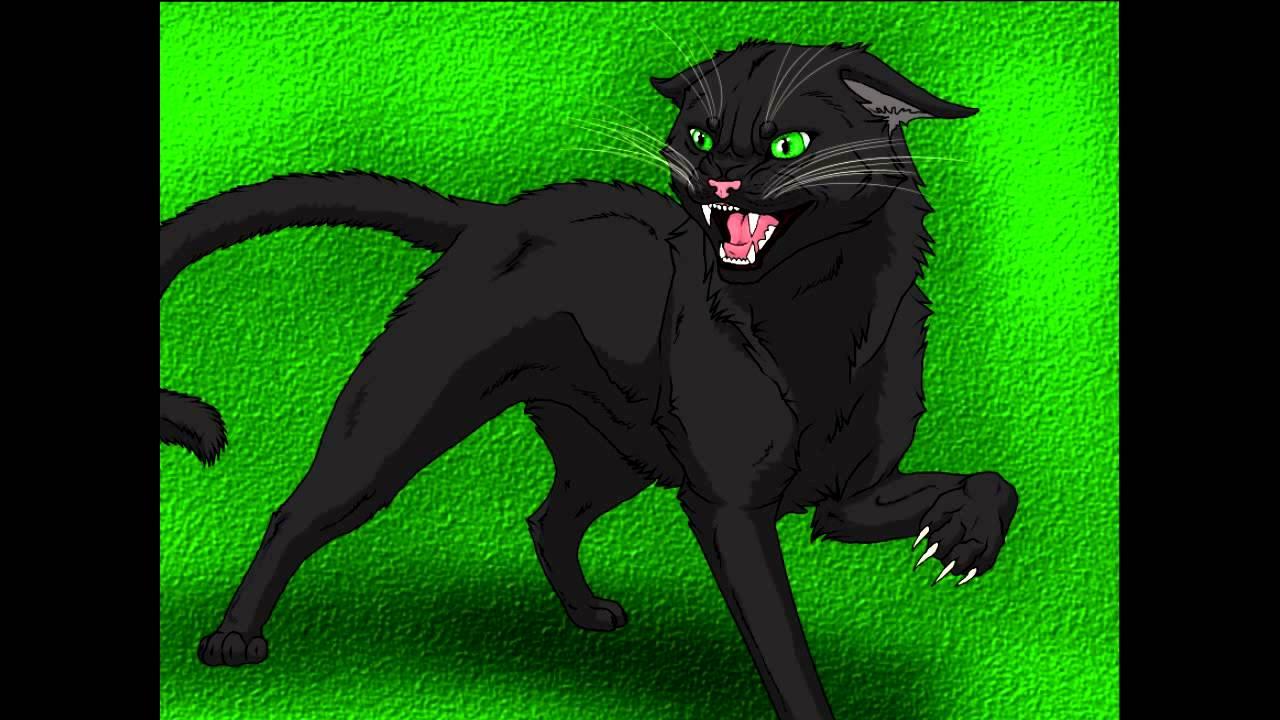 Warrior Cats Amv Hollyleaf