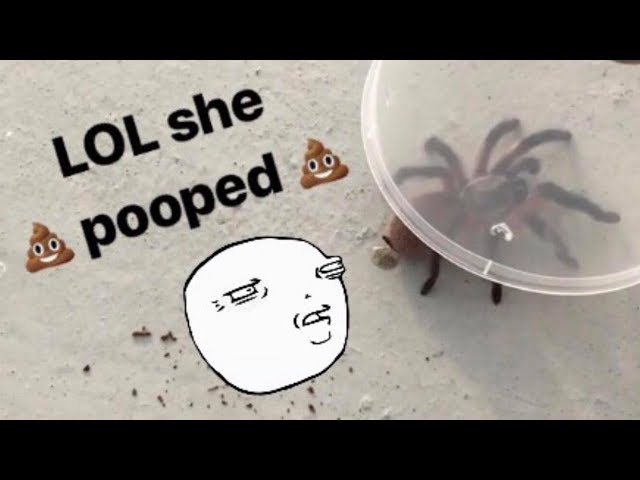 Unboxing a *pooping* TARANTULA !!! (with a chopstick!)