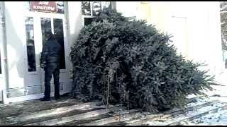Таганрог занос елки .mp4