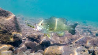 How To Catch Bass With Plastic Worms **Incredible Underwater Footage**