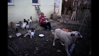 Emekli maaşıyla 25 kedi, 15 köpek bakıyor