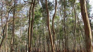 Eucalyptus In Baatein Kheti Ki - On Green TV
