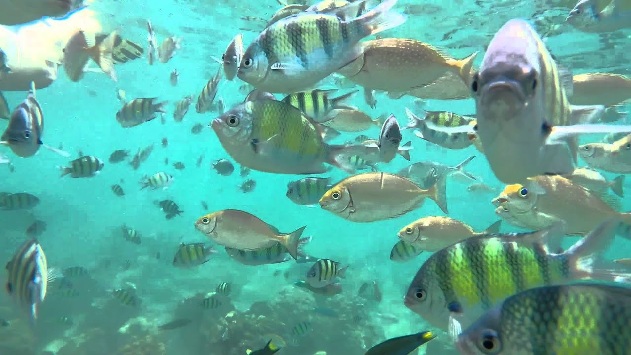 Snorkeling in Phi Phi Islands, Thailand - YouTube