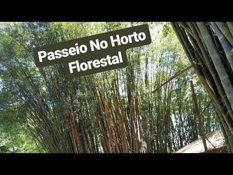 Férias Em Rio Claro | Episódio 04 - Passeio No Horto Florestal