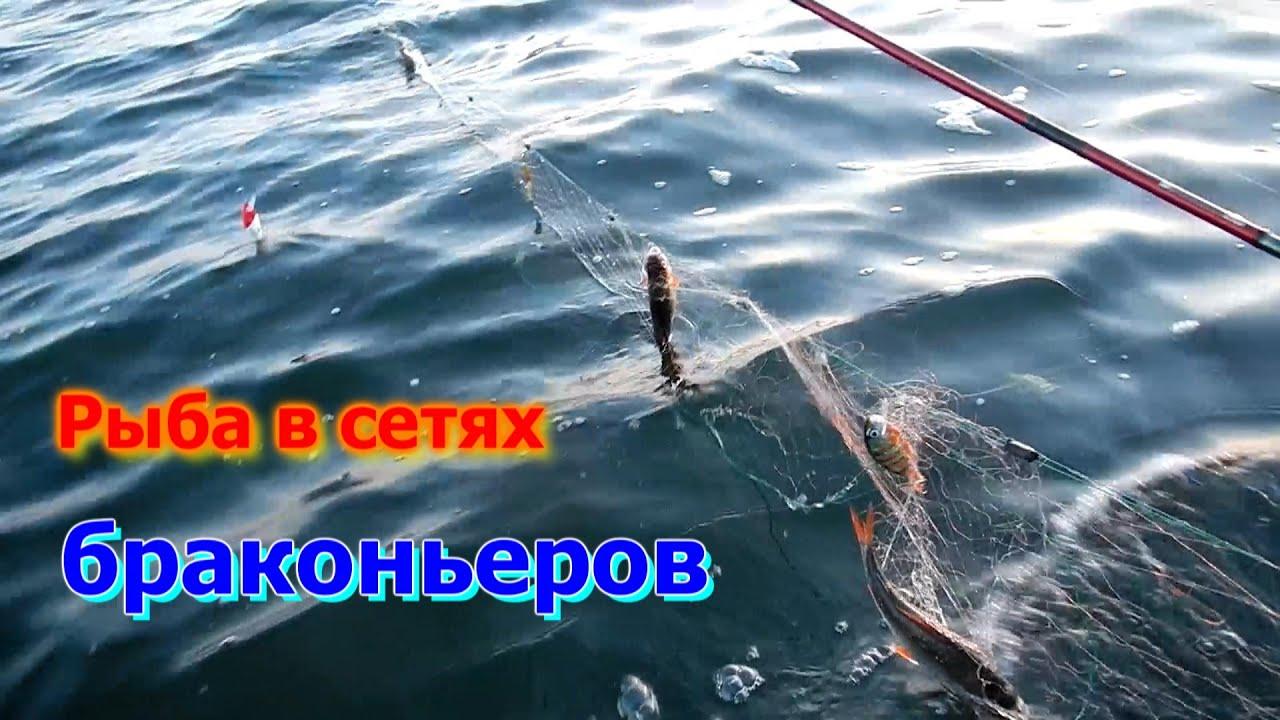 запрещенная рыбалка сетями