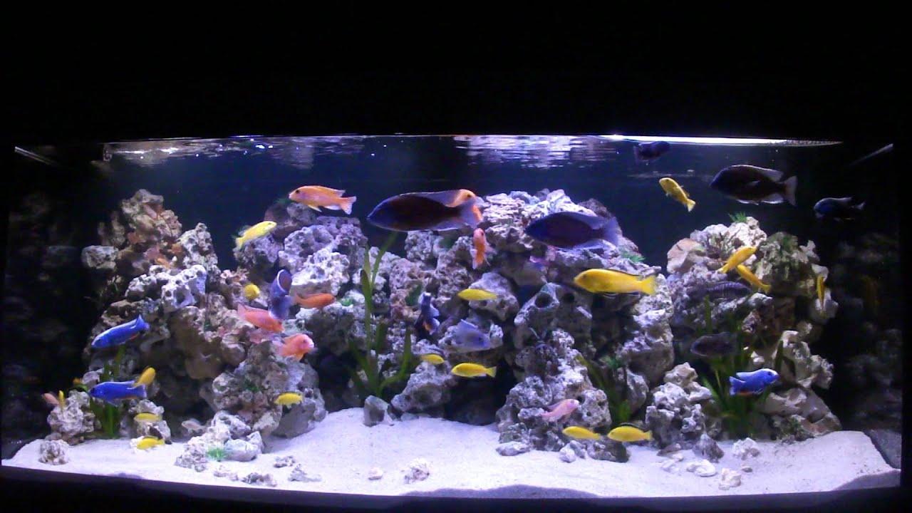 Aquarium hornig patrick youtube for Aquarium einrichtungsideen
