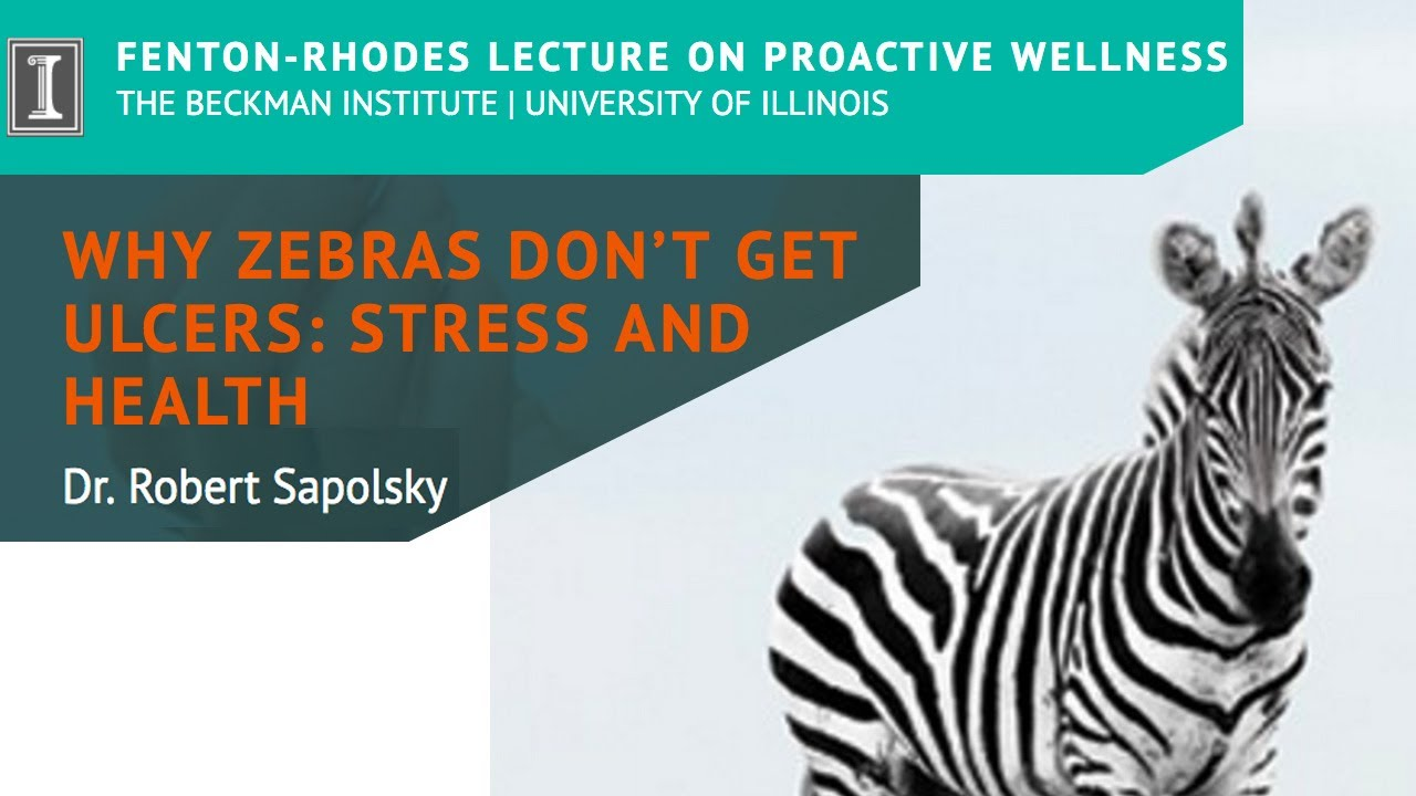 "Watch ""Why Zebras Don't Get Ulcers: Stress and Health"" by Dr. Robert Sapolsky (Short)"