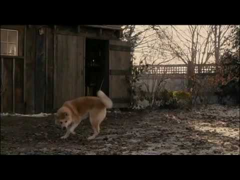 Akita dog-amazing story-YOU WILL CRY