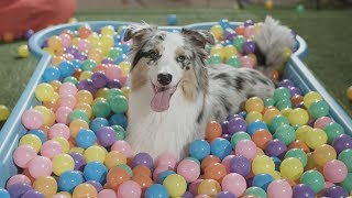 a-dog-lover-s-dream-day-out-discoverdogs