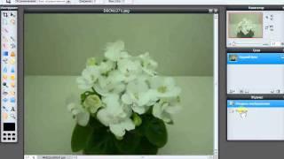 Редактирование фотографии фиалки в PhotoShop.avi