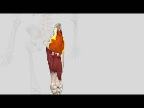 ligamentum sacrotuberale dehnen