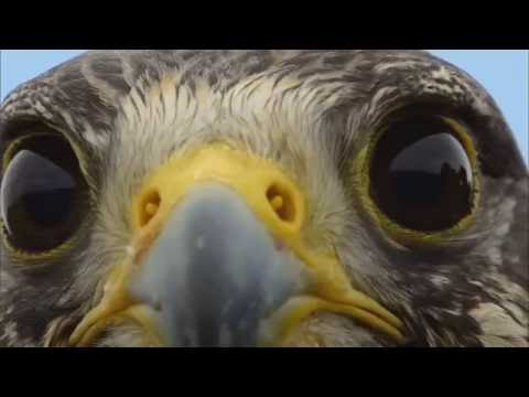 Spirit Bird - Xavier Rudd - with video clips from Earthflight series