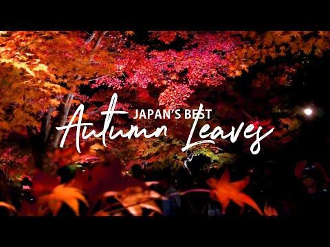 Special Autumn Leaves Light Up in Matsushima, Japan |  TRAVEL VLOG
