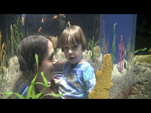 The Tennessee Aquarium with Toddler Rowan and Fetus Ivan