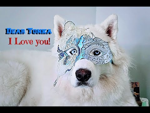 Dear Tonka | Advice Video