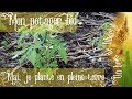 🌸 Mon potager bio - Mai, je plante en pleine terre 🐞