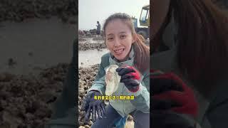 Primitive-Seafood 2021-الغابات…