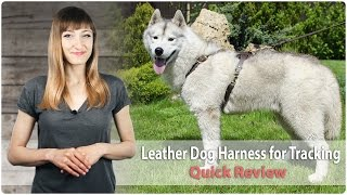 Leather Walking & Tracking Harness For Working Dogs - Fordogtrainers Review
