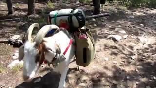 Pack Goat to Wyoming's Thumb Lake:  Walk in (1)
