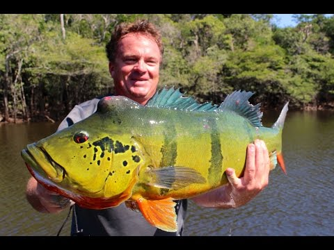 Amazon Fly Fishing Peacock Bass