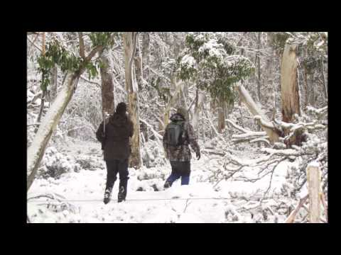 Deer Hunting At Herne Lodge, Central Highlands, Tasmania