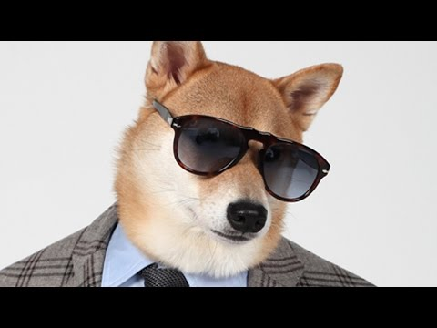 Menswear Dog, The Chic Shiba: Pet Pooch Models Designer Fashion
