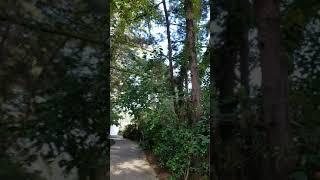 천리포 수목원 한 정경