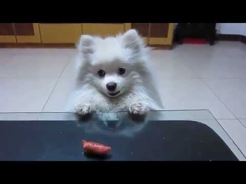 Dog Can't Reach Sausage on Table