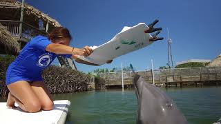 Florida Travel: Visit the Dolphin Research Center in the Florida Keys