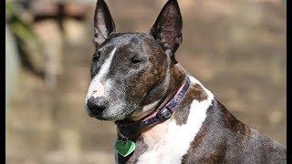 Top 5 razas de perros poderosos
