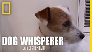 Dog Anxiety | Dog Whisperer
