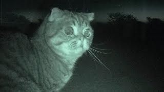 야생 고양이를 소개합니다