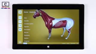 Horse   Anatomy : Animal Biology