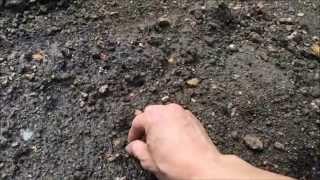 丹波黒大豆枝豆の種まき