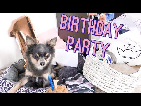 Рожденият ден на кученцето ми   Дневничето на Арчи
