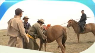 Планета собак. Монгольская борзая.