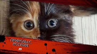 Смешные КОТЫ #9 / ИЗОЛЯЦИЯ / Лучшие приколы 2020 / Funny cats.