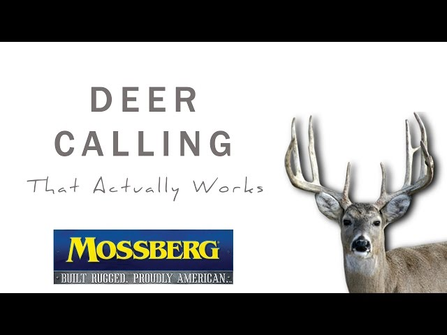 Deer Calling Method Many Hunters Never Use