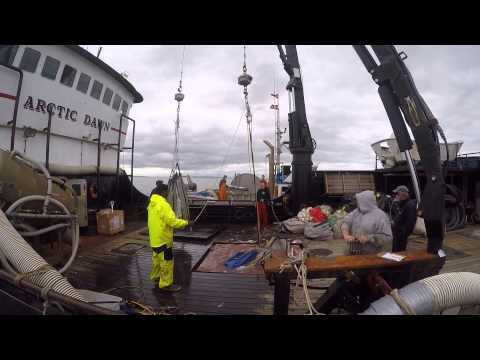 Commercial Salmon Fishing, Tillken 2015