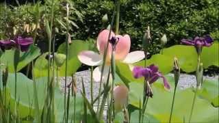 Download Hindi Video Songs - Uth Mukunda Sarali Raat - Suman Kalyanpur *** HD