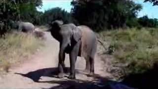 Zambian Safari thumbnail