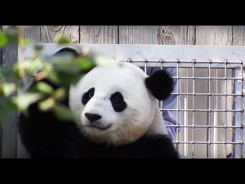 cub gets massaged