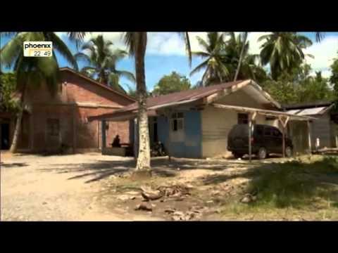 Tödliches Palmöl   Die letzten Orang Utans von Sumatra Doku