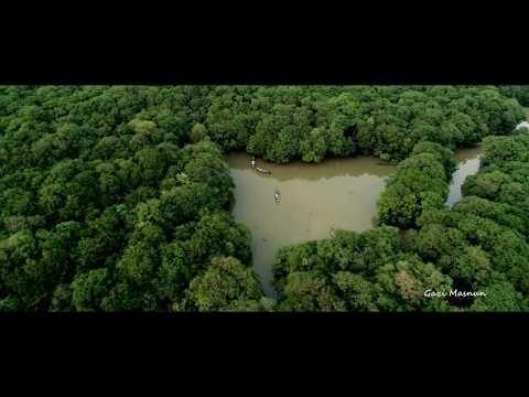 Ratargul Swamp Forest Aerial View | Sylhet, Bangladesh