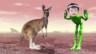 учить животных для малышей | животные для детей видео развивающее | часть 2