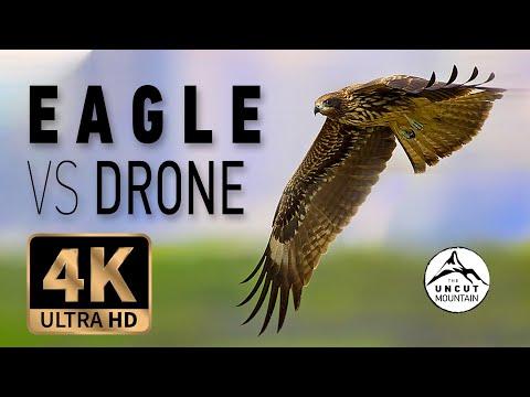 Eagle vs Drone 4K - Bonelli's Eagle attack (Aquila fasciata)
