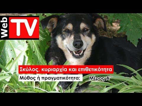 Σκύλος, κυριαρχία και επιθετικότητα... Μέρος Ά