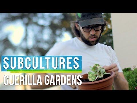 Guerrilla Gardening in Los Angeles  SubCultures