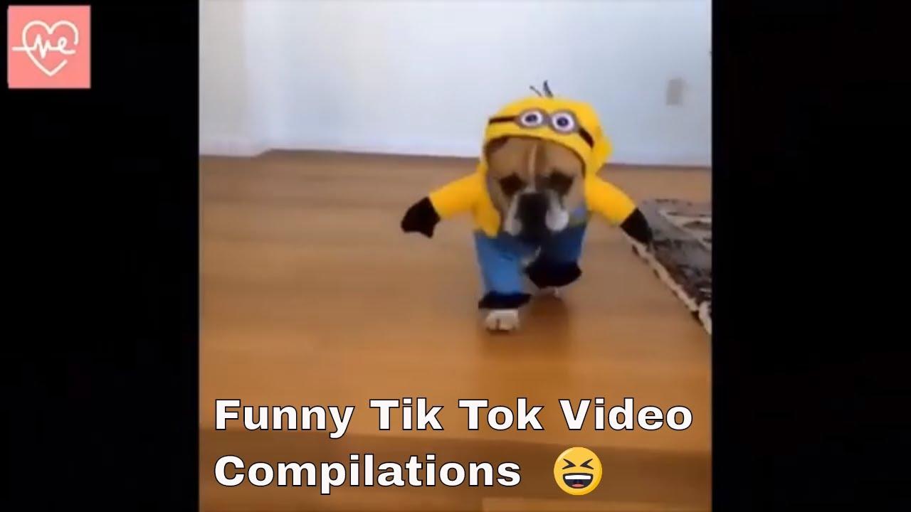 Funny Tik Tok Dog Video Compilations