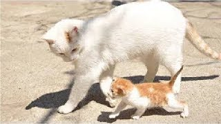 Cute Cats is Not Enough – Most Funny Cats Compilation #2 | Funny Cat Videos